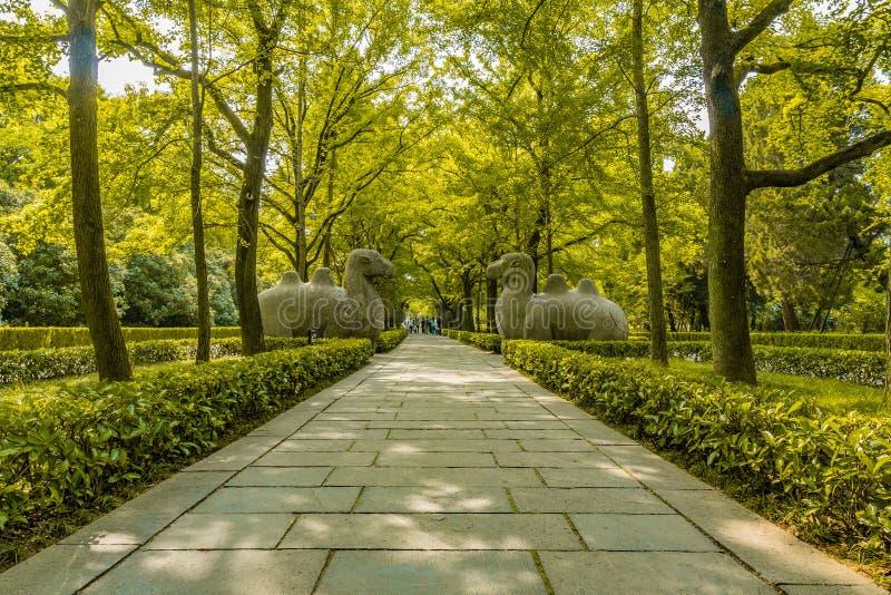 China Nanjing Ming Xiaoling Mausoleum 14. Nanjing Ming Xiaoling Mausoleum Elephant Road Spirit Way Leading Lines Two Sitting Camels Sculptures stock photos