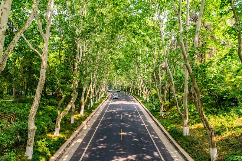 China Nanjing Ming Xiaoling Mausoleum 05. Nanjing Ming Xiaoling Mausoleum Mingling Road Leading Lines High Angle View with Cars and Forest Trees stock photos