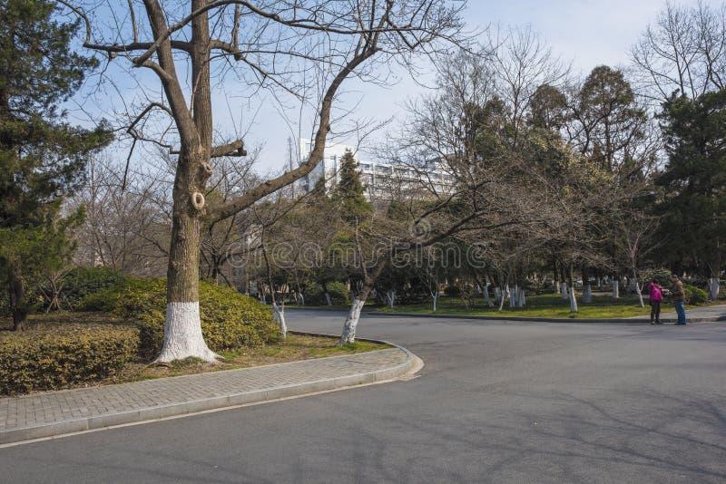 Nanjing skogsbrukuniversitetsområde arkivfoton
