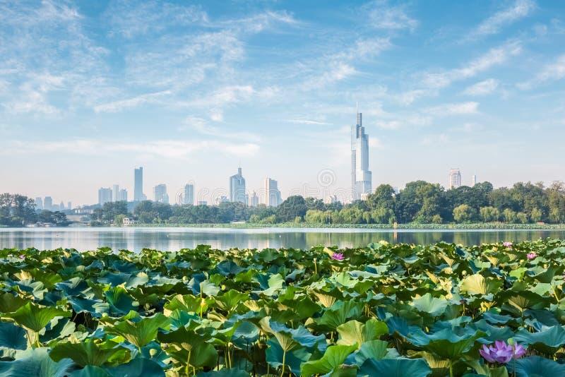 Nanjing skyline and lotus. Modern city with lake stock photo