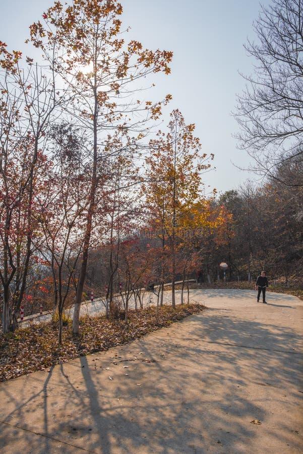 Nanjing was de bovenkant van het berglandschap stock fotografie