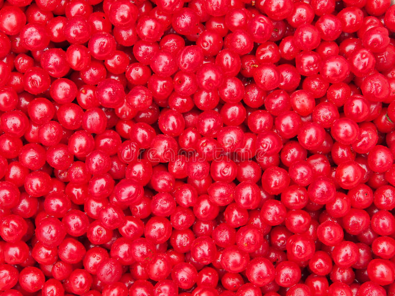 Nanking Cherry Fruits Background imagens de stock royalty free