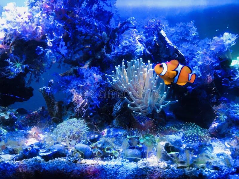 Nano риф стоковое изображение