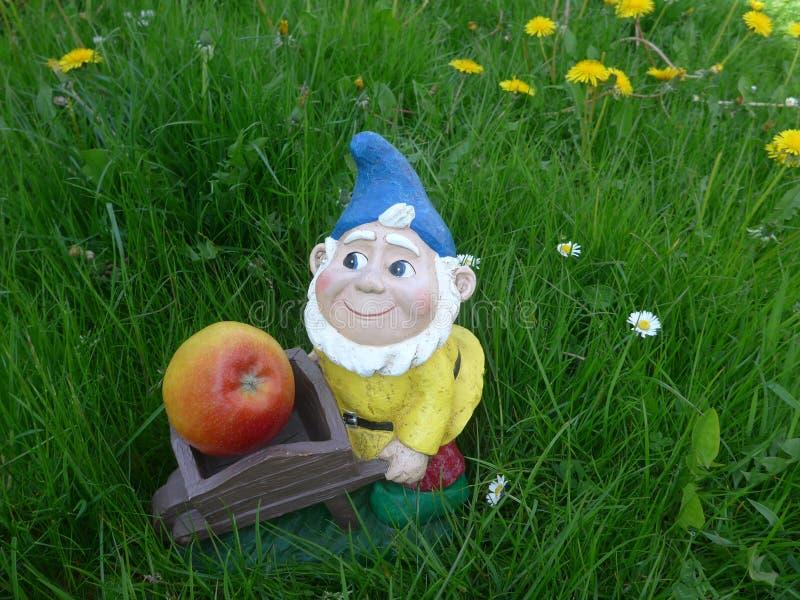 Nano del giardino con la carriola e mela su un prato verde con i denti di leone fotografia stock