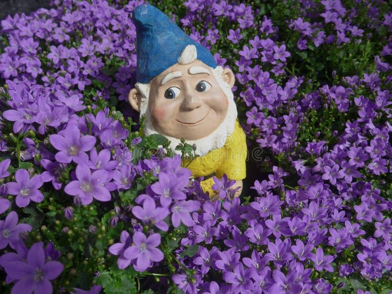 Nano divertente del giardino in un letto di fiore viola fotografia stock