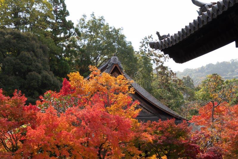 Nanzenji temple framed by beautiful autumn maple. Higashiyama  Kyoto royalty free stock image