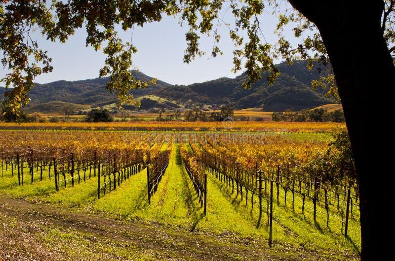 Napa Valley California Autumn Vineyards immagine stock libera da diritti