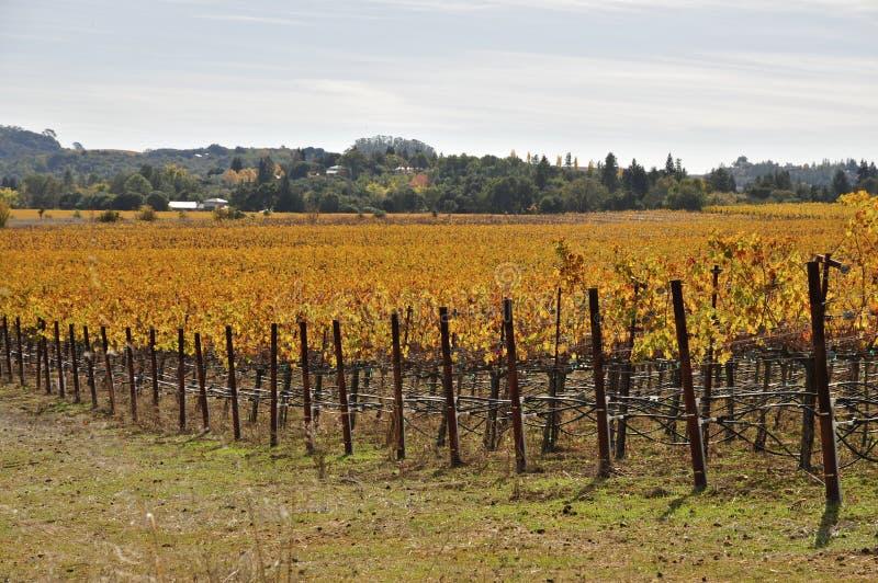 Napa Valley no outono imagem de stock royalty free