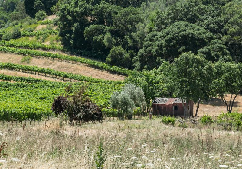 Napa Valley, old shed in the vineyard stock photography