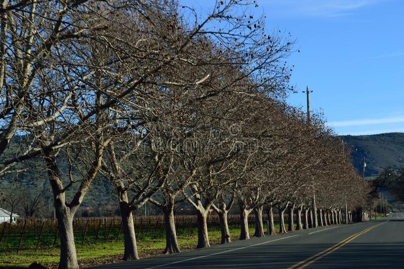 Napa Valley Road Trip. Lined road side trees and hilly background royalty free stock photo