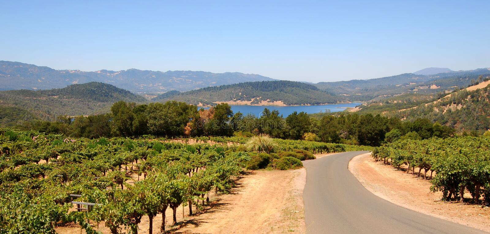 Napa Valley Vines and Mountains royalty free stock photos