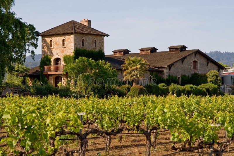Napa Valley vineyard at sunset royalty free stock photo