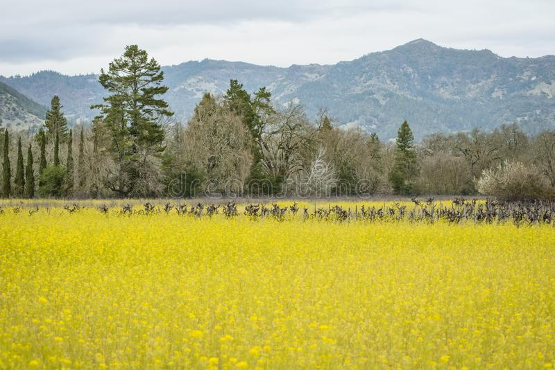 Napa Valley, wine country stock photography