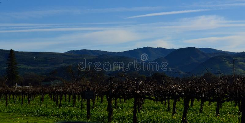 Napa- Valleyrebyard im Winter stockbild