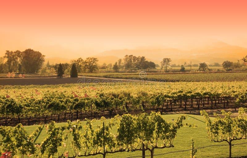 Napa Vineyard Sunset Stock Photos