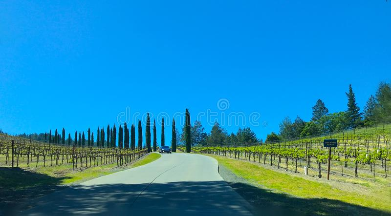 Napa-Weinbergeingang mit hohen Zypresse-Bäumen, -Weinreben und -kurvenreicher Straße stockfotos