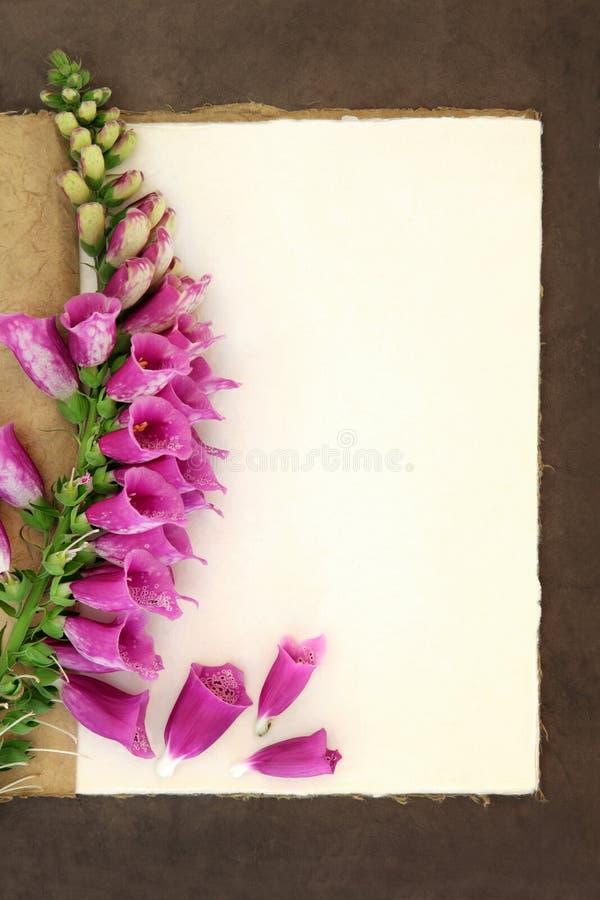 Naparstnica kwiat zdjęcia royalty free
