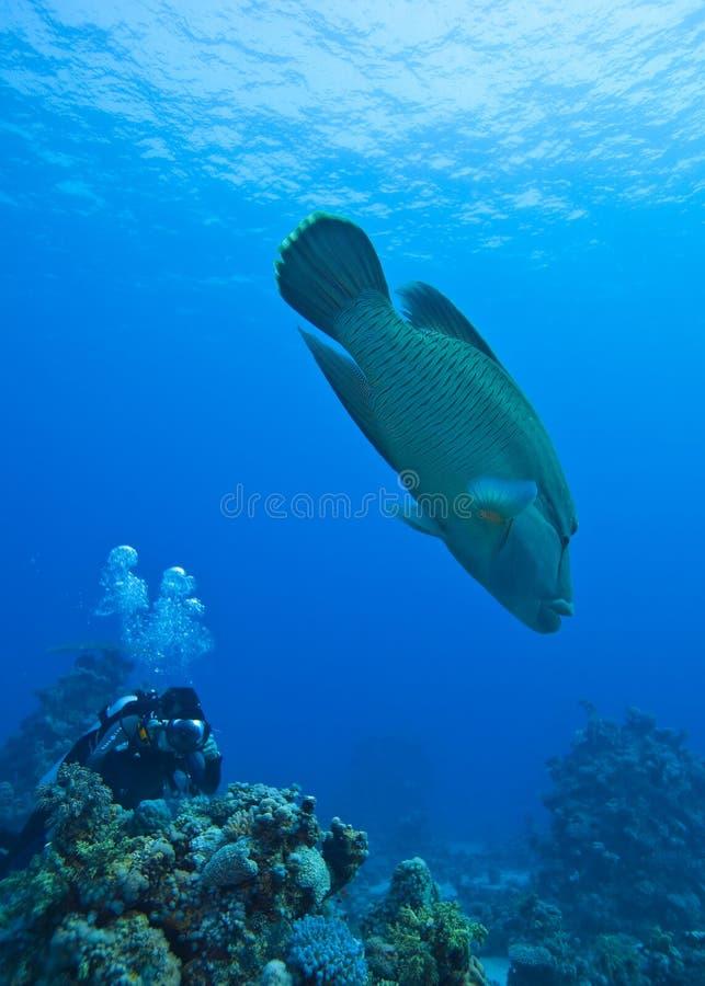 Napoleonvissen en een fotograaf royalty-vrije stock foto