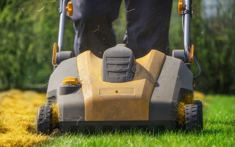 Napowietrzenie gazon w ogródzie Żółty przewietrznik na zielonej trawie obraz royalty free