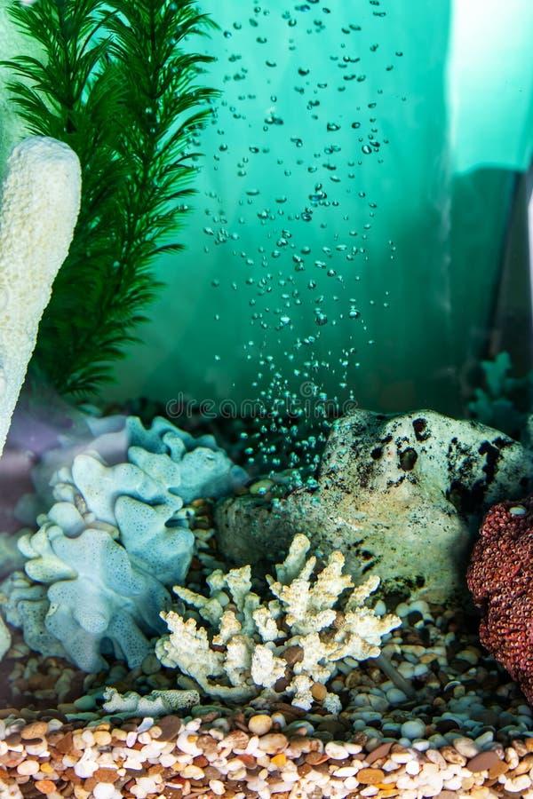 Napowietrzenie woda w akwarium zdjęcie royalty free