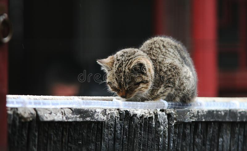 Download Napping cat on the roof stock photo. Image of roof, little - 8395498