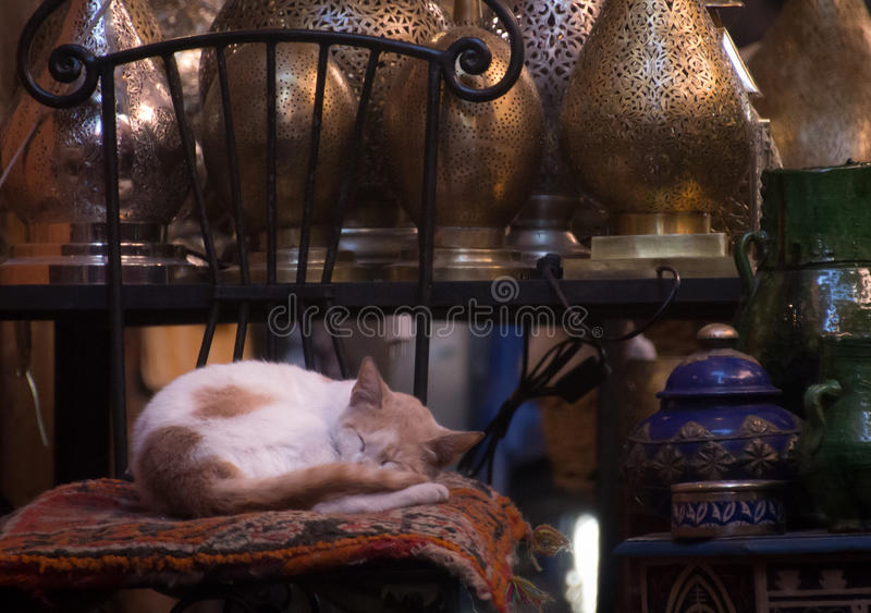 Napping time at the souk royalty free stock photography