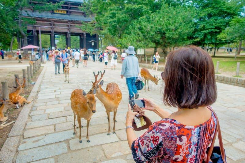 Nara, Япония - 26-ое июля 2017: Неопознанная женщина фотографируя одичалые мужчина и женщина оленей в парке Nara в Японии стоковое фото