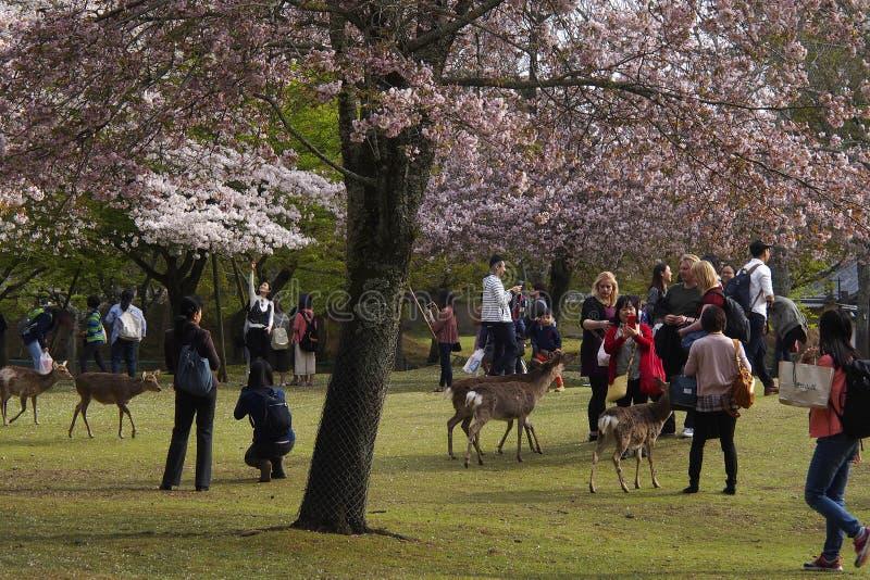 Nara City Park royalty free stock photos