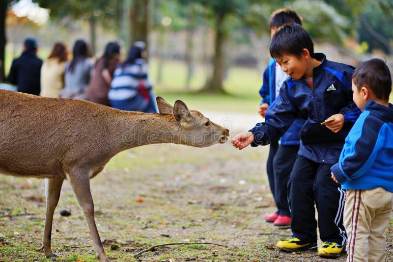 Nara Deer lizenzfreie stockfotos