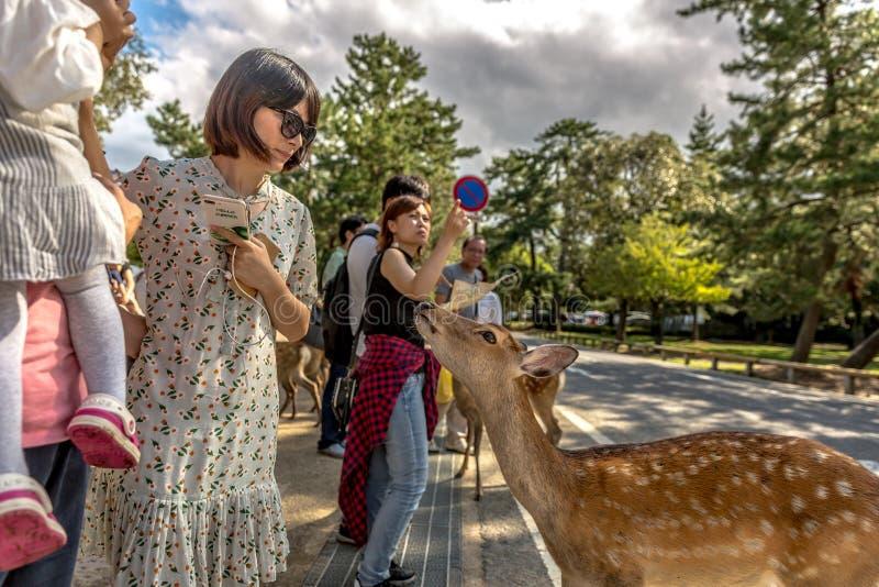 Nara, Japão - 18 de setembro de 2018 - um cervo que joga com uma família local na cidade de Nara em Japão foto de stock