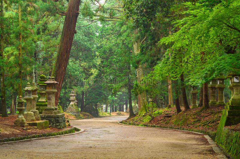 Pilgrimage road to Kasuga Taisha Shrine, stone lanterns, Nara, Japan stock image