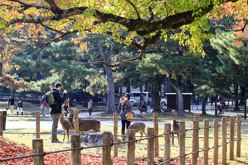 Wild deer and people crossing a red torii in Kasuga-taisha in Nara ...