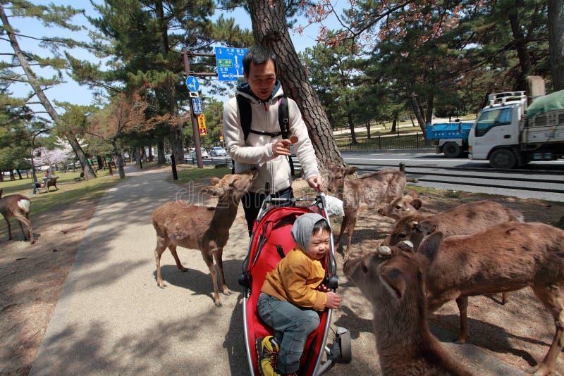 Nara Park, Japón fotos de archivo