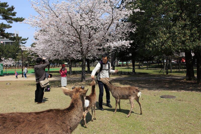 Nara Park, Japón foto de archivo