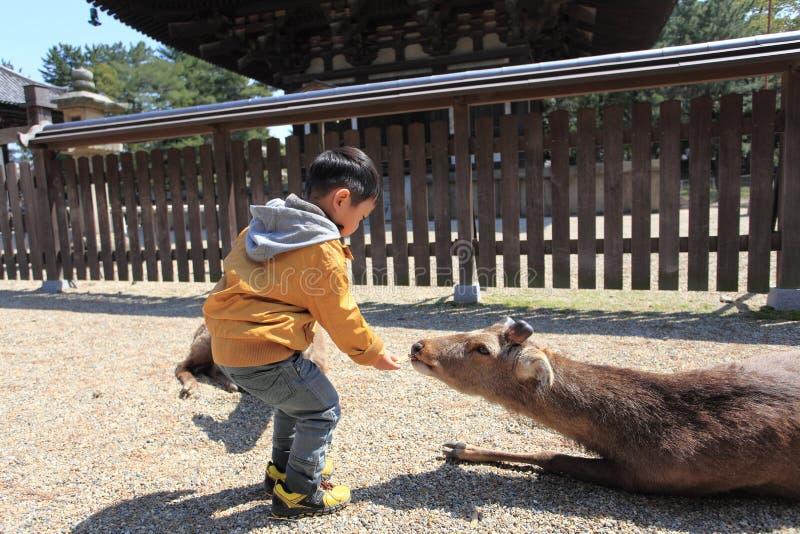 Nara Park,Japan stock images