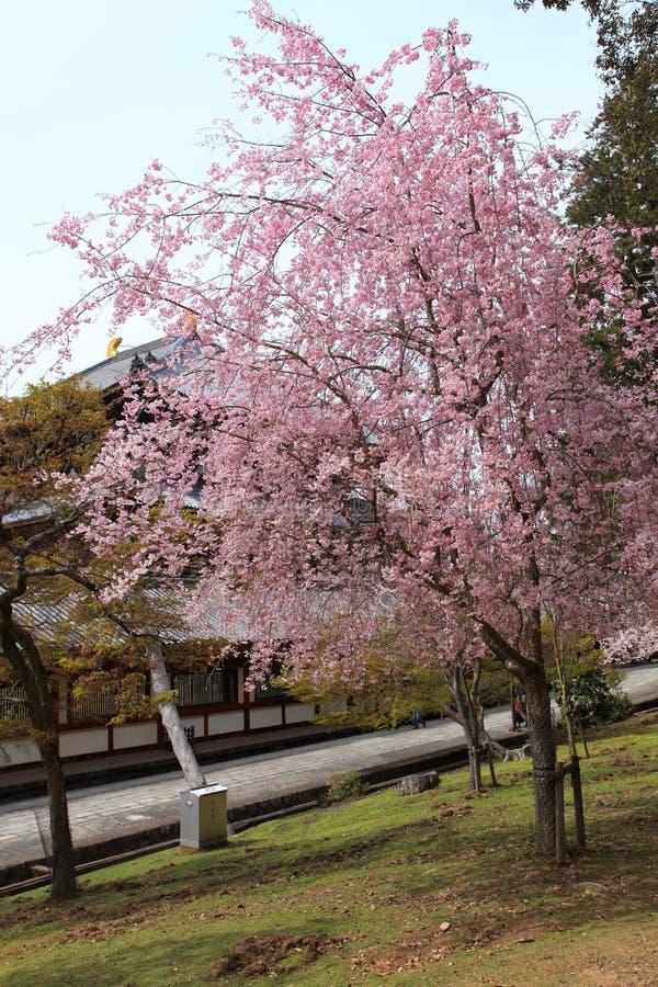 Nara Park,Japan stock photo