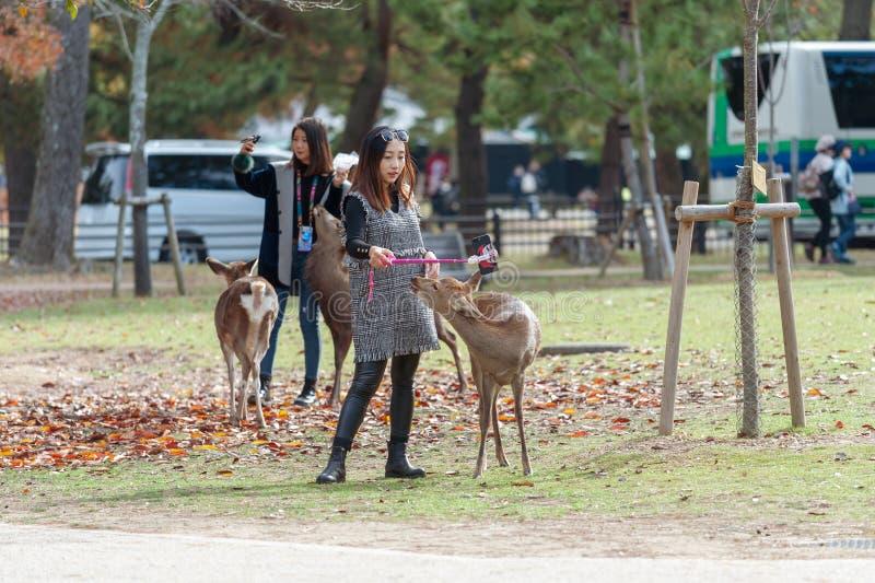 Nara-Park in Japan mit Rotwild und Touristen herum Rotwild, die in Nara Park in Japan durchstreifen stockfoto