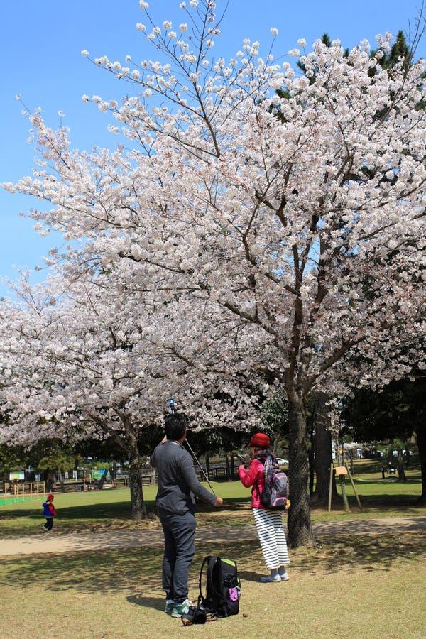 Nara Park,Japan stock photography