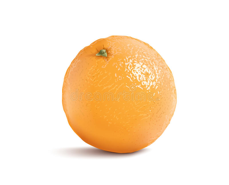 Naranja aislada del vector libre illustration
