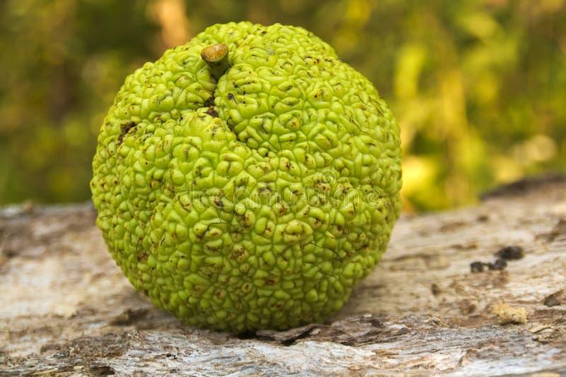 Naranja de Osage (pomifera del Maclura) imagen de archivo libre de regalías