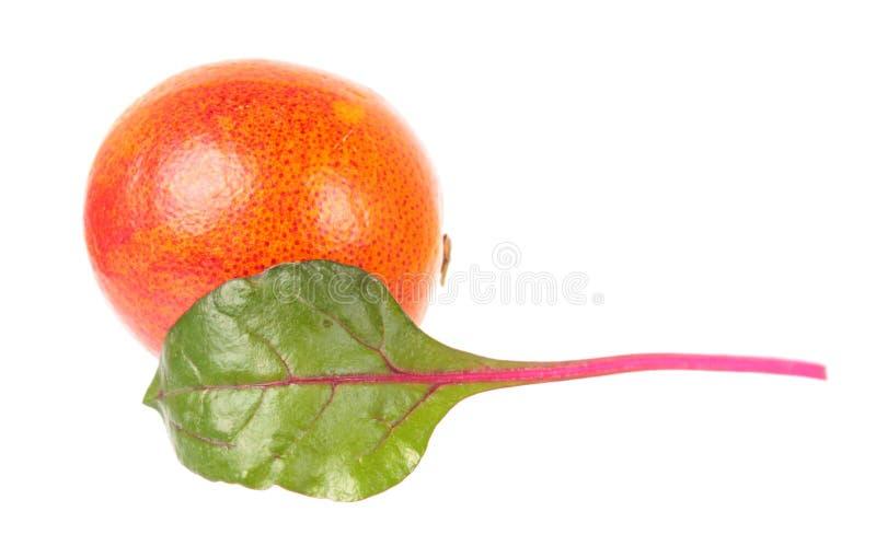 Naranja de sangre y hoja joven fresca del verde del cardo aisladas en el fondo blanco Ingredientes para la ensalada imagen de archivo