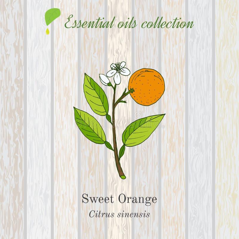 Naranja dulce, etiqueta del aceite esencial, planta aromática stock de ilustración