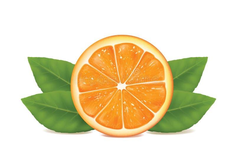Naranja en el fondo blanco libre illustration