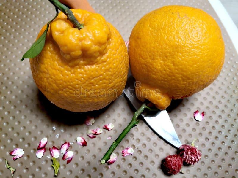 Naranja fea dos imagenes de archivo