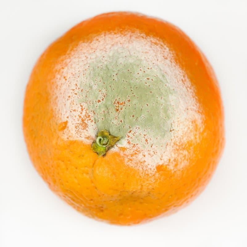 Naranja mohosa fotografía de archivo libre de regalías