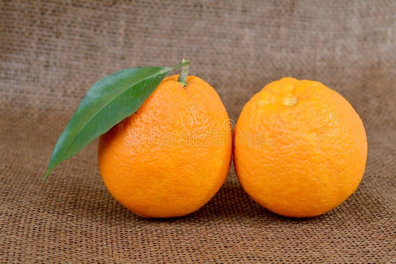 Download Naranja orgánica imagen de archivo. Imagen de refresco - 64212611