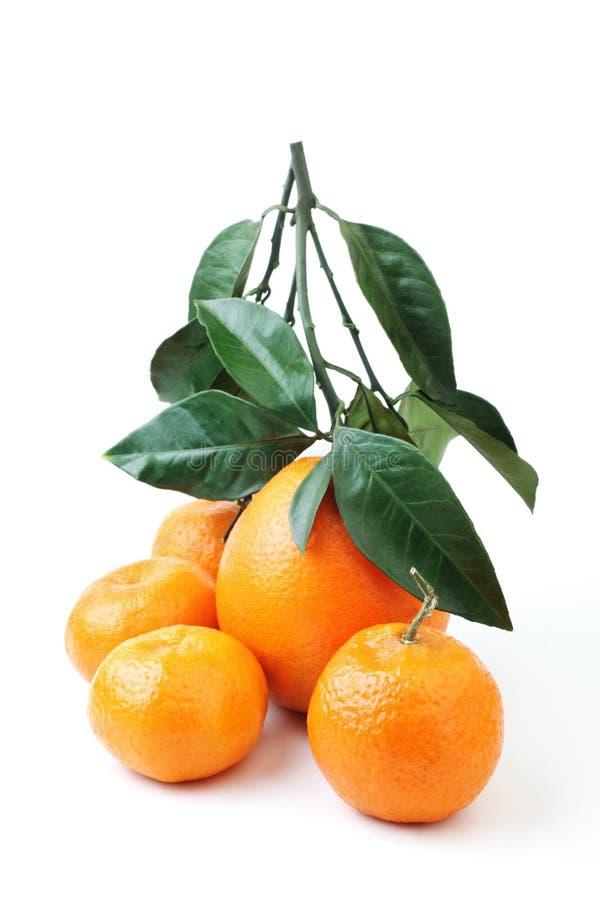 Naranja y mandarina del grupo de la fruta cítrica foto de archivo libre de regalías