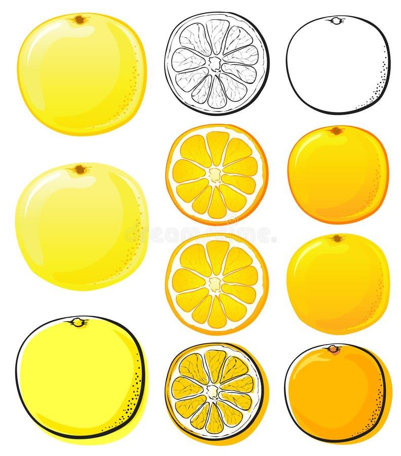 Naranja y pomelo libre illustration