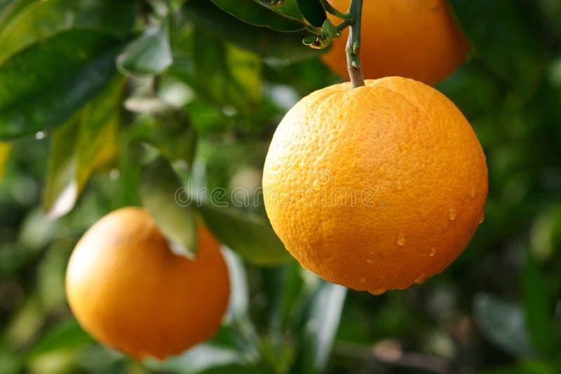 Naranjas fotos de archivo