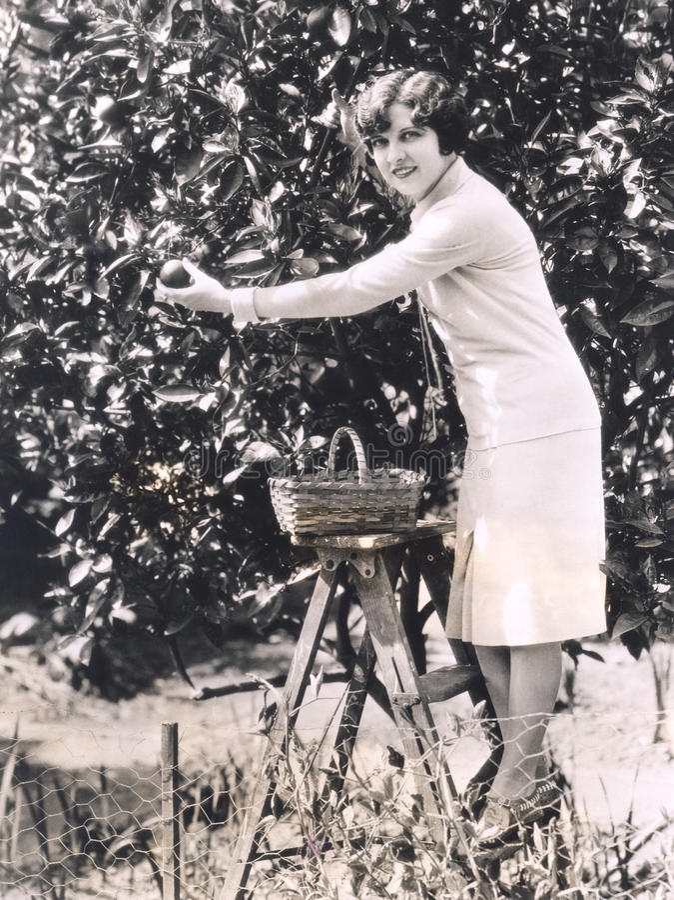 Naranjas de la cosecha de la mujer de un árbol fotos de archivo
